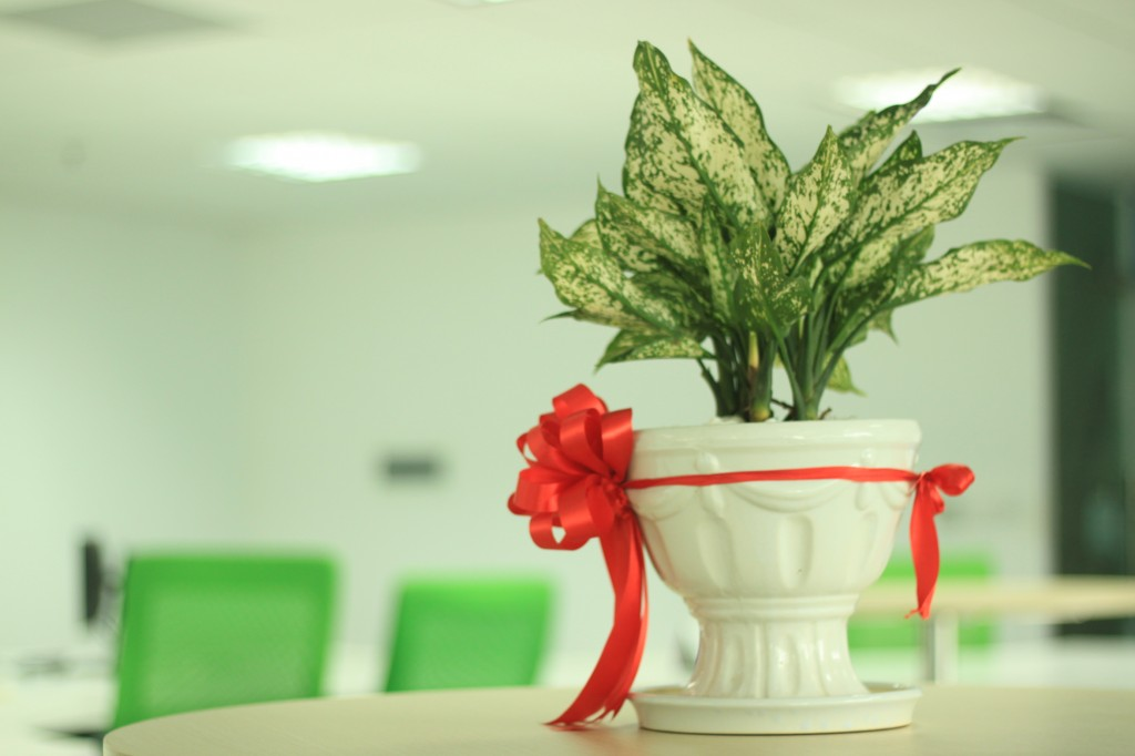 plant as a present